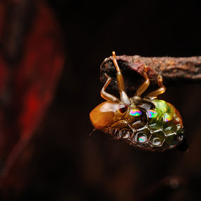 Spittlebug by Ramlan Abdul Jalil - Animals Insects & Spiders