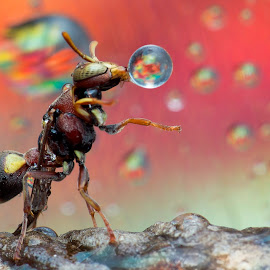 Wasp 160212A by Carrot Lim - Animals Insects & Spiders ( colour, macro, wasp )