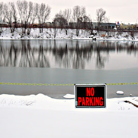 Duh!!! by Vince Scaglione - Landscapes Weather ( sign, no parking, parking, winter, season, cold, ice, snow, lake )