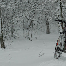 A montain bike in white snow by Poiana Cipolin - Transportation Bicycles