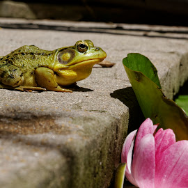 by Luc Raymond - Animals Amphibians