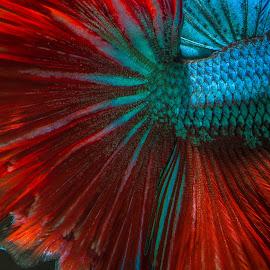 My Tail by Eeezam Mon - Animals Fish