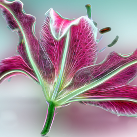by Dipali S - Digital Art Things ( nature, pink, flower, tiger lilly )