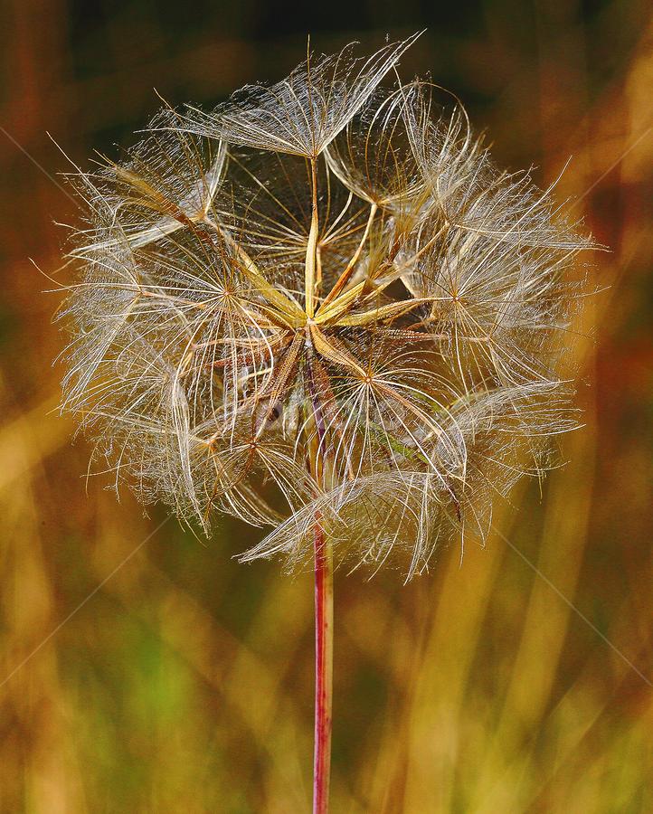 Akène au soleil by Gérard CHATENET - Nature Up Close Other plants