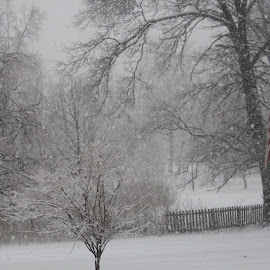 Winterscape by Rebecca Oyer - Nature Up Close Trees & Bushes (  )