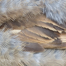 young feathers by Nick Parker - Abstract Macro (  )