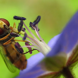 by Canon Eos - Animals Insects & Spiders (  )