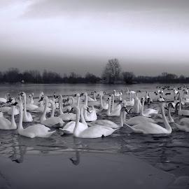 by Manuela Dedić - Black & White Animals
