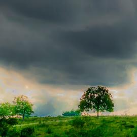 Shadow of the sun by Matt McEuen - Landscapes Prairies, Meadows & Fields ( clouds, farm, field, ky, sky, nature, farmland, trees, kentucky )