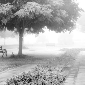 My lonely neighborhood by Scott Lorenzo - City,  Street & Park  Neighborhoods ( winter, nature, park, grass, fog, snow, trees )