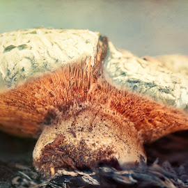 Rise Mushroom by Janice Sullivan - Nature Up Close Mushrooms & Fungi ( fungi, texture, mushroom growing, mushroom. macro, closeup )