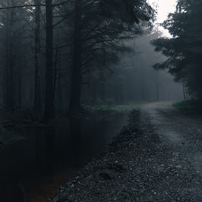 misty morning by Hannah Rugg - Landscapes Forests ( tree, fog, forest, landscape, mist )