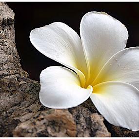 by Koento Birowo - Nature Up Close Flowers - 2011-2013 (  )