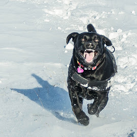 by Ríkarður Óskarsson - Animals - Dogs Running