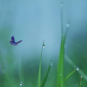 by Yuliani Liputo - Nature Up Close Flowers - 2011-2013