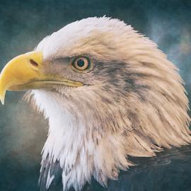 Baldy On Blue by Bill Tiepelman - Digital Art Animals ( bird, eagle, bald eagle, closeup, profile )