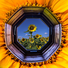 Sunflower window by Paul Drajem - Digital Art Things ( frame, window, sunflowers, glass, artistic, windows, yellow, flowers, landscape, composite, photoshop )