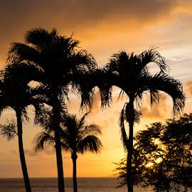 Sunset Napilli Point  by Janet Marsh - Landscapes Sunsets & Sunrises ( maui, sunset, palm trees,  )