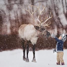 Christmas Cheer by Patty Schmitt - Public Holidays Christmas ( winter, little boy, beautiful, snow, christmas, childhood, boy )