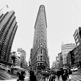 Flat Iron by Pete Eley - Black & White Buildings & Architecture ( fisheye, black and white, new york city, architecture, city,  )