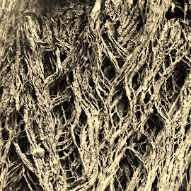Tree Bark by Sarah Harding - Novices Only Macro ( sepia, macro, nature, tree, novices only )