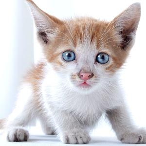 CAT_8332.jpg