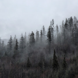 Fog goals. by Todd Bellamy - Landscapes Forests ( clouds, foggy, fog, forest, landscape )