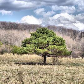 by Brian Boyd - Landscapes Prairies, Meadows & Fields