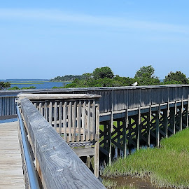 Assateague State Park boardwalk marsh trail by Mary Gallo - City,  Street & Park  City Parks