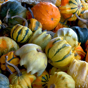 Gourds by June Morris - Nature Up Close Gardens & Produce