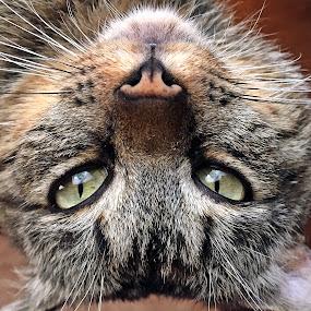 Tigrisor by Dobrin Anca - Instagram & Mobile iPhone ( love, home, cat, romania, friend,  )