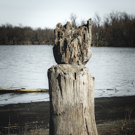 Tree Stump Watching the Lake by Rob Heber - Artistic Objects Still Life ( shore, natural light, twigs, waterscape, tree stump, still life, remote, landscape, ripples in water, lake shore, weathered, driftwood, tree, nature, secluded, tree line, wetland, ripples, bark, shoreline, branches, closeup, water, isolated, lake, scenic, calm water, woods, close up, winter, outdoors, sticks, woodland, bare trees, wooded area )