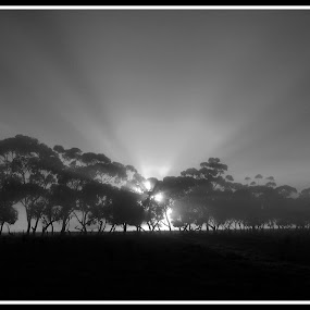 Sunrise through the Fog by Sassine El Nabbout - Landscapes Sunsets & Sunrises ( mono-tone, b&w, black and white, b and w, monotone, landscape )