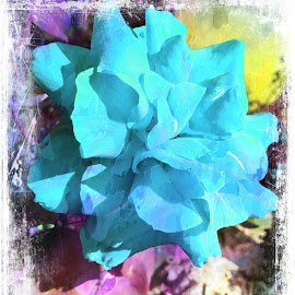 Baby Blue by Leslie Hunziker - Instagram & Mobile iPhone ( blue, roses, plants, flowers, garden )