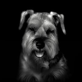 In mood by Akkarapat Kantamala - Animals - Dogs Portraits ( potrait, pet, dog portrait, dog, animal,  )