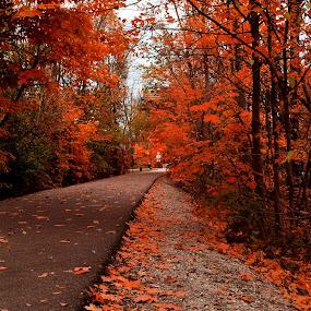 Fiery Fall by Avishek Bhattacharya - City,  Street & Park  City Parks ( walking trail, monon trail, fall colors, leaves, autumn, fall foliage, carmel, indiana,  )