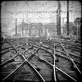 On The Right Track by Guy Longtin - Transportation Railway Tracks ( b&w, railyard, train, tracks, steel, railway tracks,  )