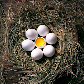 Egg Nest  by Azeem Shah - Food & Drink Eating