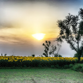 Farm by Abdul Rehman - Instagram & Mobile iPhone ( pakistan, natural light, nature, national geographic, sunset, summer, nature up close, natural )