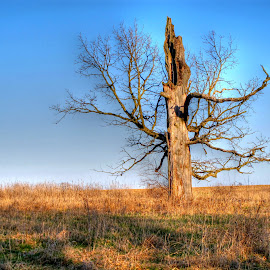 dead tree by Fraya Replinger - Nature Up Close Trees & Bushes ( countryside, illinois, tree, rural, country,  )