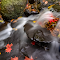 Fall Stream a  11 10 18.jpg