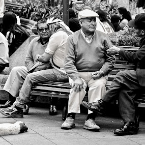 Leisure for Man and Dog by Kate Anthony - People Street & Candids ( quito, ecuador, leisure, black and white photography, street photography )