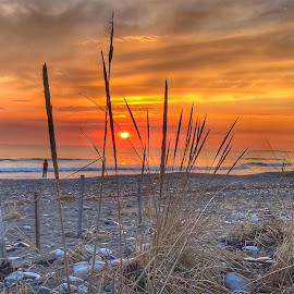 Good morning  by Ann Goldman - Landscapes Sunsets & Sunrises ( grass, sunrise. ocean, beach, sun )