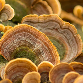 Cool by Heather Gustner - Nature Up Close Mushrooms & Fungi ( mushrooms, nature, depth of field, abstract, autumn )