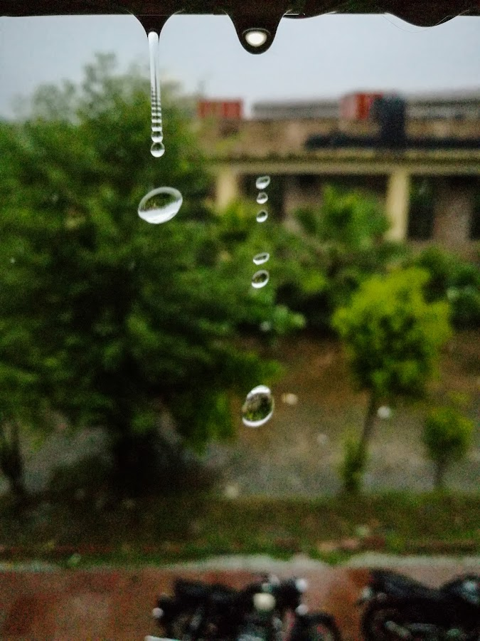Fine Capture by Rishabh Sharma - Nature Up Close Natural Waterdrops ( water, rainyday, beautiful, capture, drops, nature up close, falling, fine, rain )