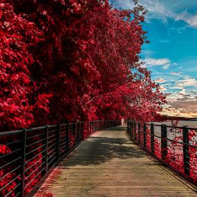 by Gigi Kent - City,  Street & Park  City Parks