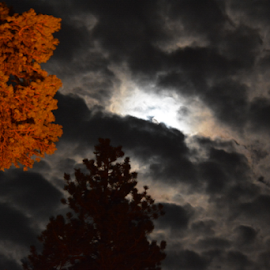 Storm Brewing by Mike Logan - Landscapes Cloud Formations ( clouds, moon, tree, orange tree, storm )