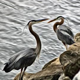 Birds Of A Feather by Roxanne Dean - Digital Art Animals ( waterscape, egrets, feathers, birds, digital )