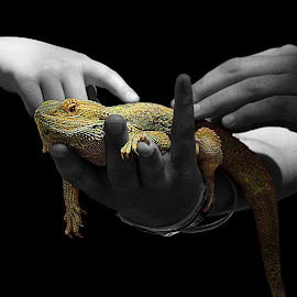 The Touch by Shawn Thomas - Digital Art Animals