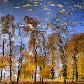 Autumn by Eugenija Seinauskiene - Nature Up Close Water